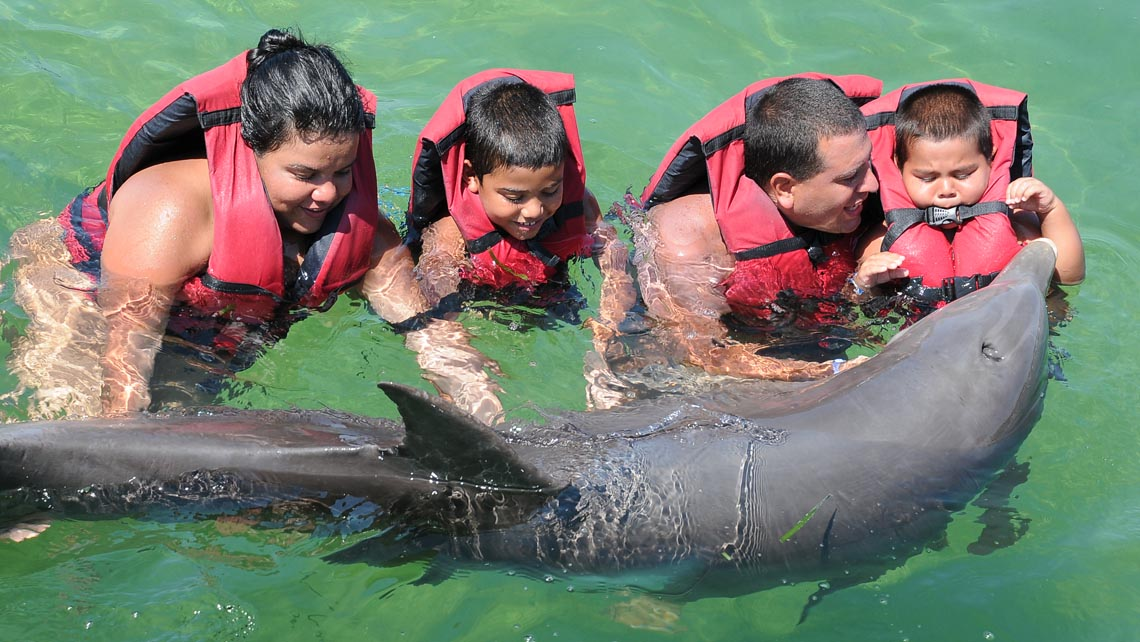 Swimming with dolphins in Varadero - Swim with Dolphins from Varadero (non exclusive)